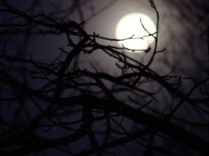 Pesadillas y terrores nocturnos: Cómo actuar